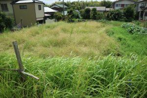 敷地の草刈り完了です